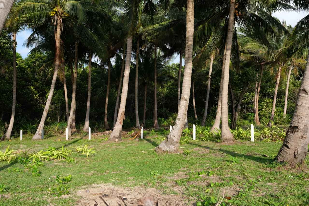 Binga-Beach-Palm-Trees-Thicket