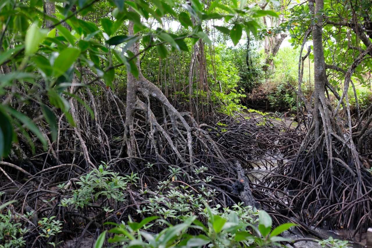 Mangrove-view-1