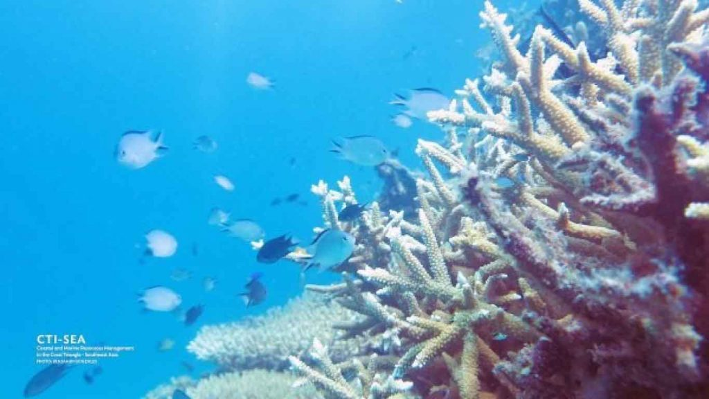 Quimbaludan-Island-Coral-Garden