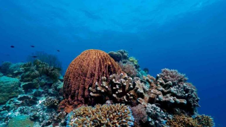 Top Ten Scuba Dive Spots in Northern Palawan